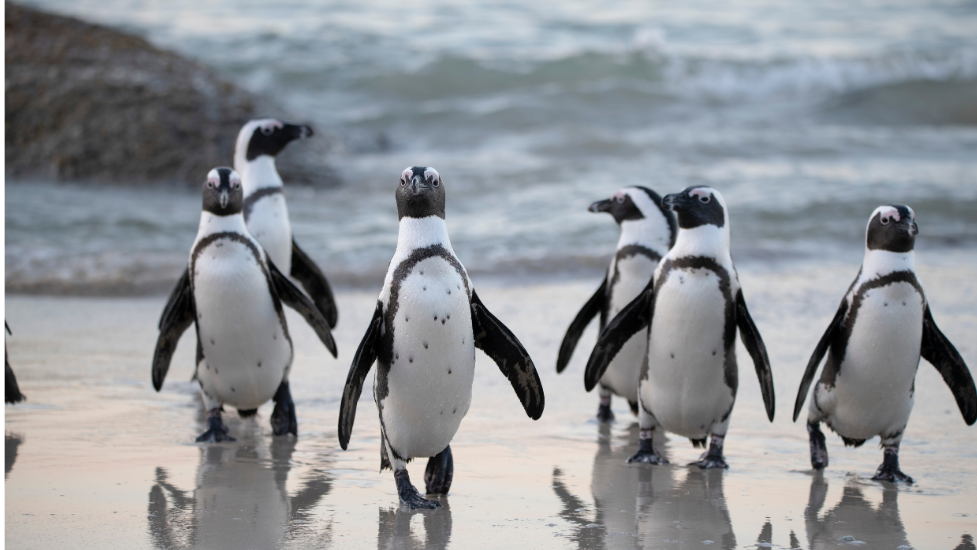 a penguin standing on a sandy beach