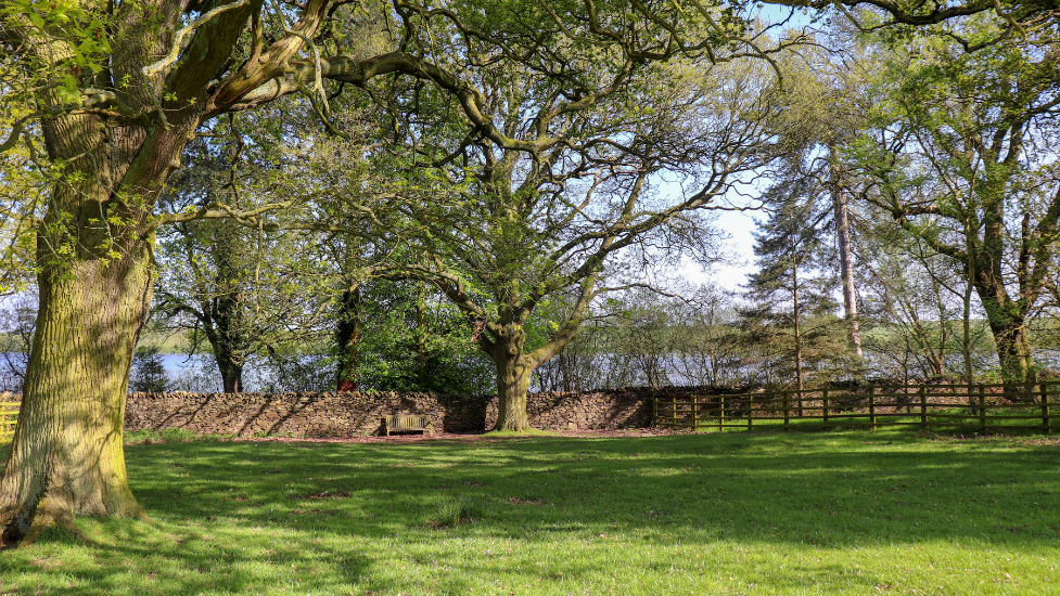 a large tree in a grassy field