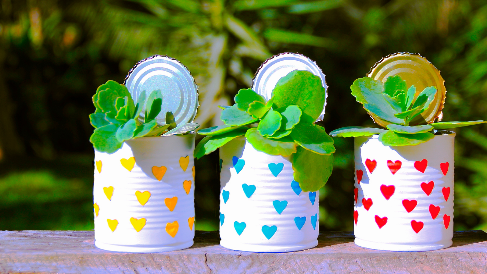 3 plants in tin cans