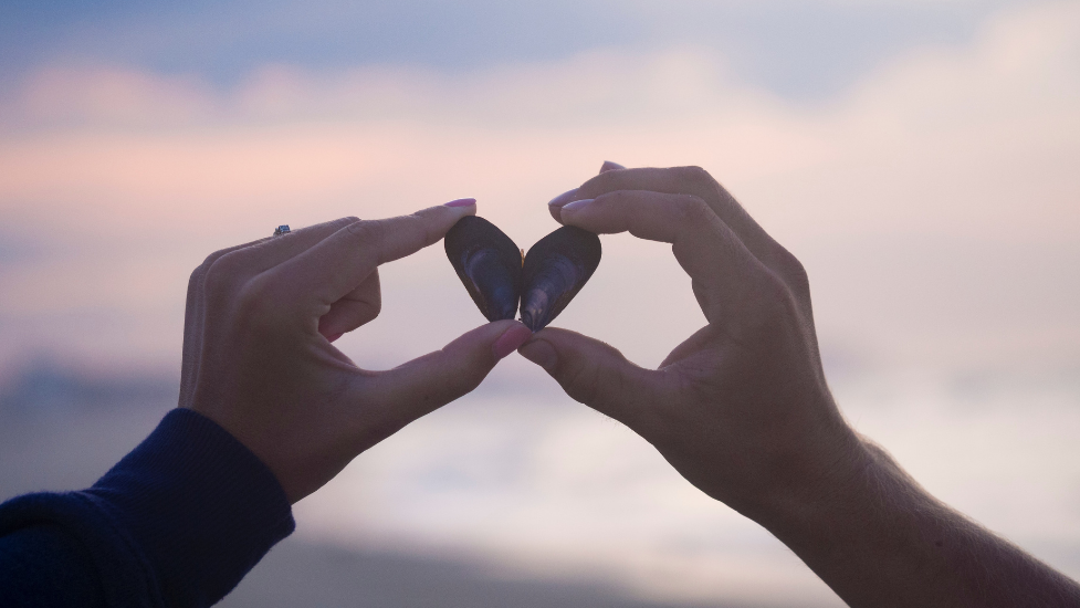 two hands holding up shells in the shape of a heart
