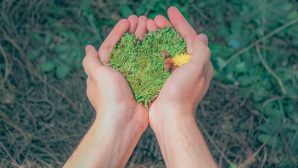 a hand holding grass