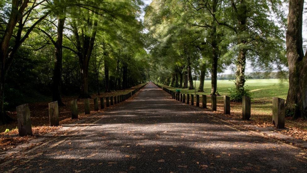 a path in a park