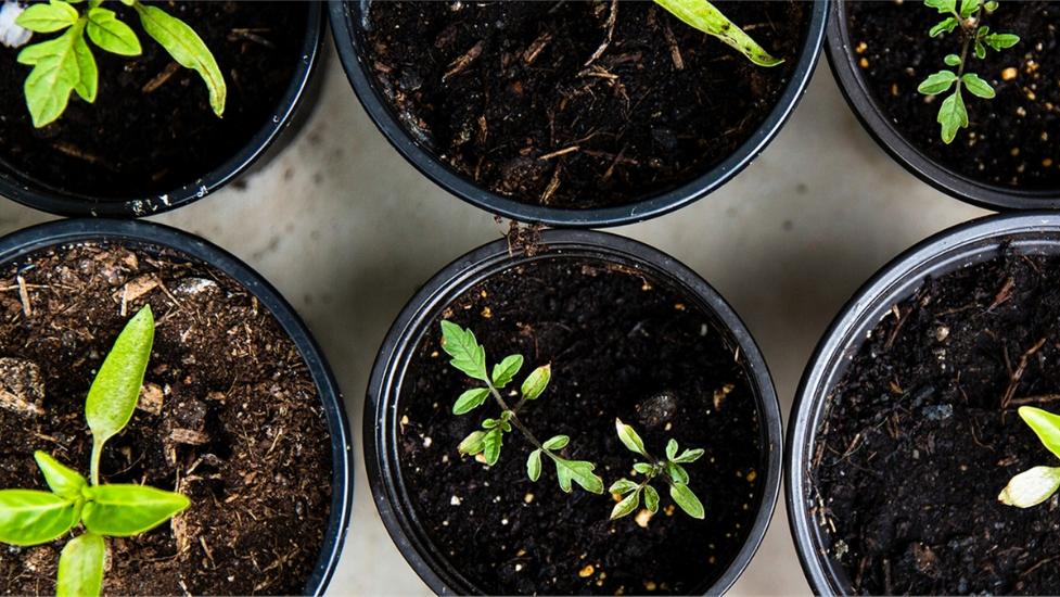 plants in plant pots