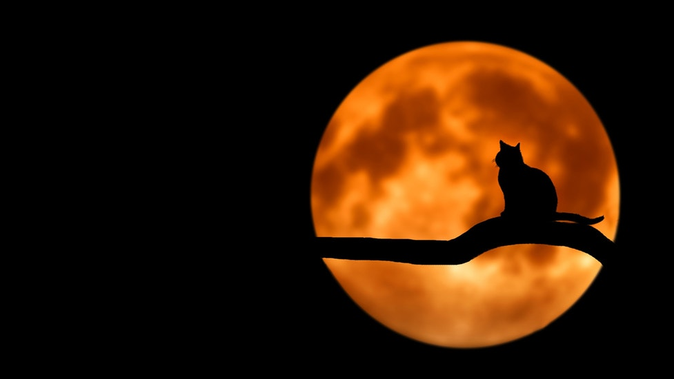 a cat in front of an orange moon