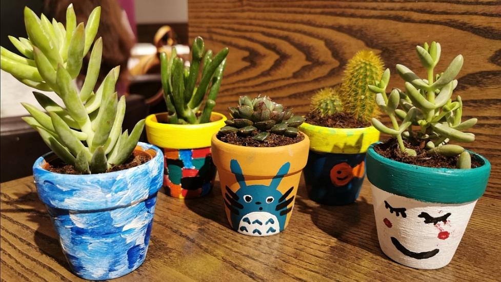 cactus plants in pots
