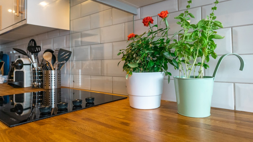 two plants on a kitchen worktop